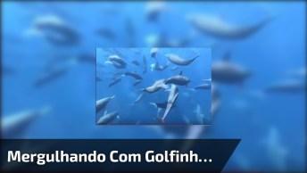 Mergulho Com Golfinhos Em Auto Mar, Veja Que Imagens Incríveis!
