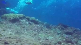 Mergulho No Jundo Do Mar Com Centenas De Arraias, Olha Só Que Incrível!