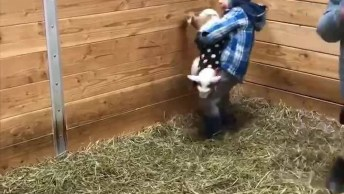 Mini Cabras E Crianças Uma Mistura Perfeita Com Sorrisos Na Certa!