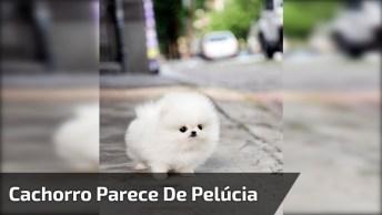 Mini Cachorrinho Branco, Parece Uma Bolinha De Pelúcia, Confira!
