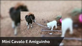 Mini Cavalo Com Seu Amiguinho Labrador, Veja Que Coisinhas Mais Fofas!