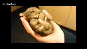 Mini Coelhinho Dormindo Na Mão De Seu Dono, Olha Só Que Belezinha!