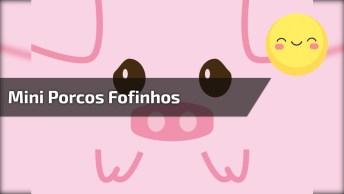 Mini Porcos Um Dos Animais De Estimação Mais Fofinhos Que Você Vai Ver Hoje!