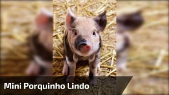 Mini Porquinho, Que Raça Mais Lindinha Estes Pequeninos Animais!