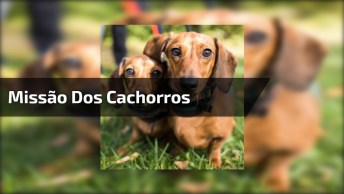 Missão Dos Cachorros Para Fazer Sua Dona Ir Passear Com Eles, Que Fofura!