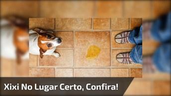 Mistura Caseira Para O Cachorro Não Fazer Mais Xixi Na Parede!