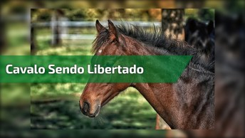 Momento Exato Que Um Cavalo É Libertado Da Carroça Que Puxou Por Toda A Vida!