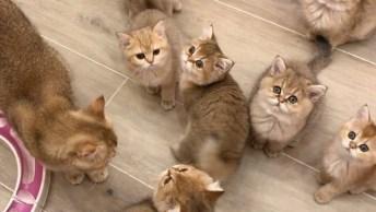 Momento Fofura Do Dia, Olha Só A Quantidade De Gatinhos, Que Fofinhos!