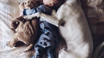 Momento Fofura Do Dia! Olha Só Que Linda Amizade Entre Cão E Bebê!