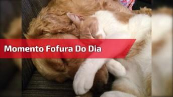 Momento Fofura Do Dia, Veja Que Amor Este Gatinho Com Seu Melhor Amigo!