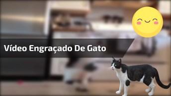 Montagem De Vídeo De Gato Dançando, Ficou Bem Engraçado, Confira!