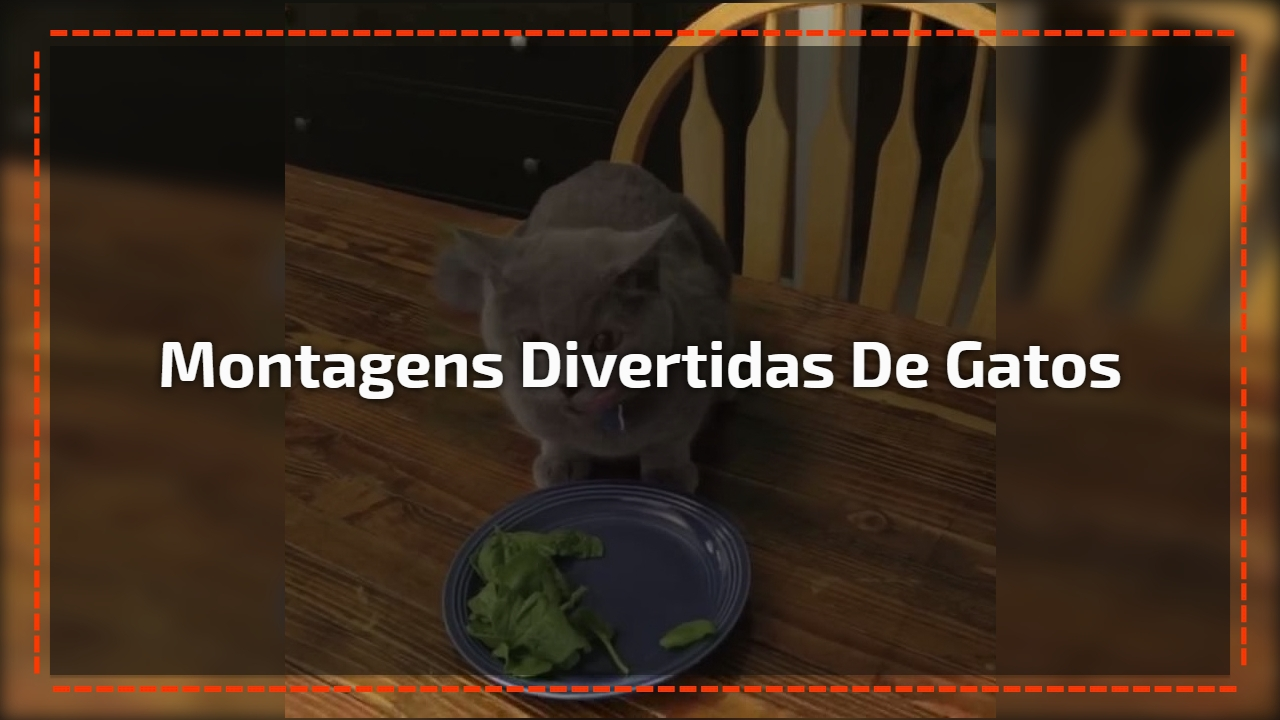Montagens divertidas de gatos