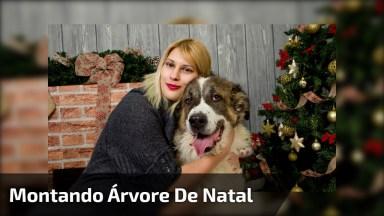 Montando A Árvore De Natal Com Melhor Amigo, Veja Como Este Cãozinho Ajuda!