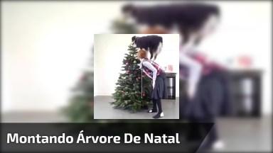 Montando Árvore De Natal Com Amiguinho De 4 Patas, Olha Só Que Amor!