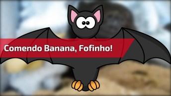Morceguinho Comendo Banana, Olha Só A Folga Dele Debaixo Das Cobertas!