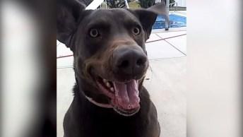 Motivos Para Se Apaixonar Pelos Cachorros, Eles Alegram Qualquer Casa!