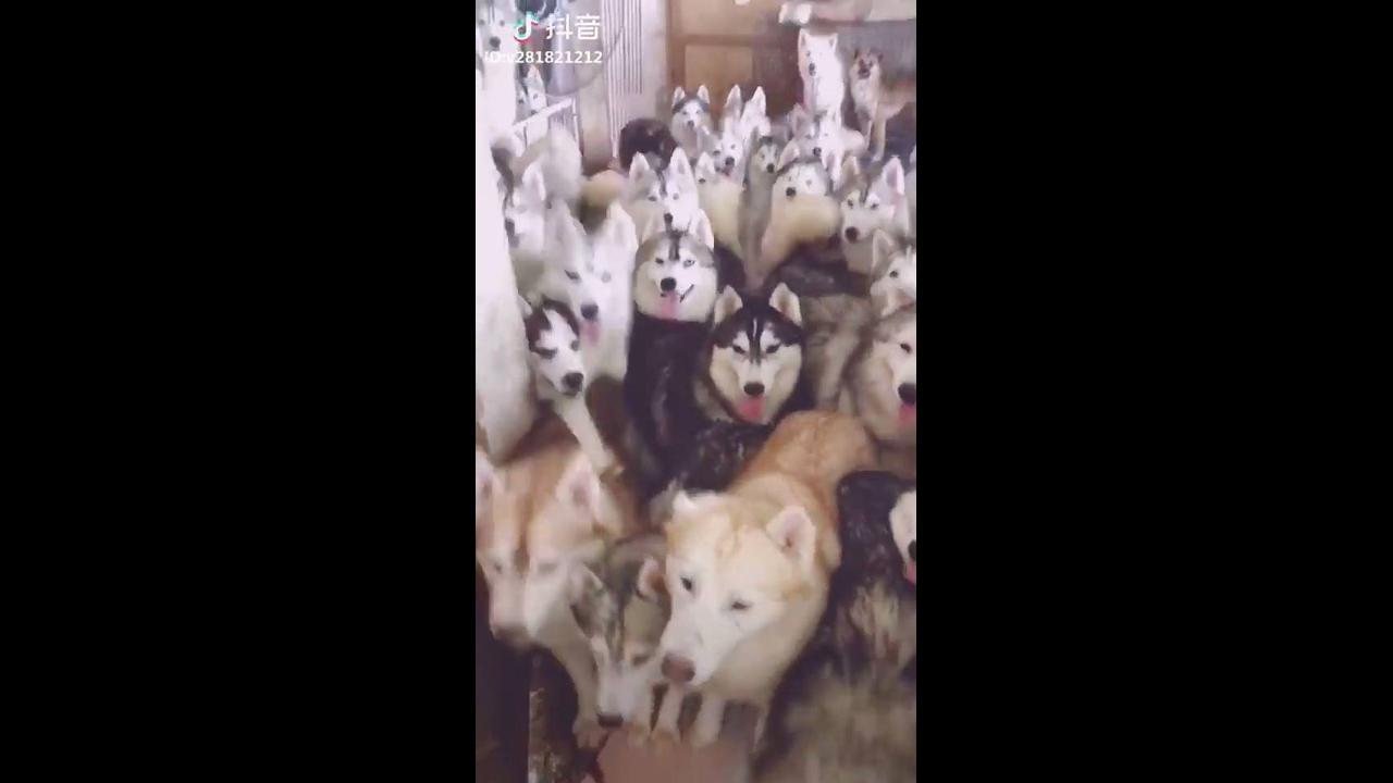 Muitos cachorros juntos