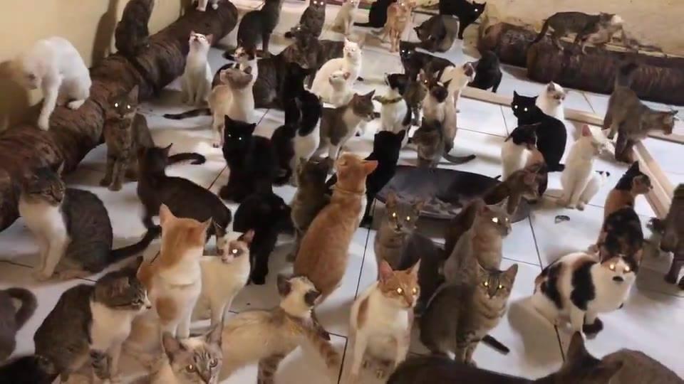 Muitos gatinho em uma sala