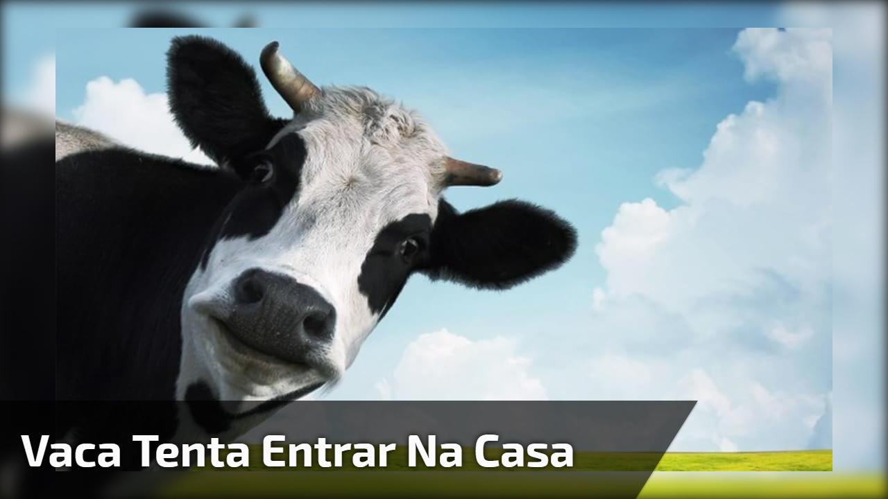 Vaca tenta entrar na casa