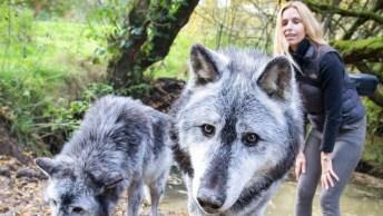 Mulher Alimentando Os Lobos Na Floresta, Essa É Corajosa Hein!