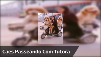 Mulher Andando De Triciclo Com Dois Cachorros Lindos E Grandes!