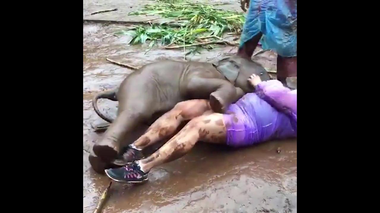 Mulher é atacada por filhote de Elefante