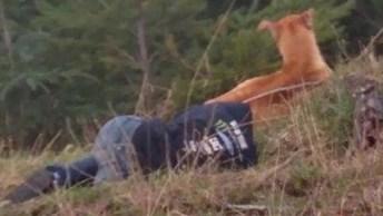 Mulher Passa Duas Horas Deitada Para Salvar Cachorro, Simplesmente Fantástico!