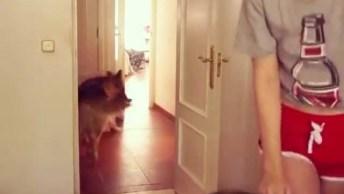 Mulher Se Esconde De Três Cachorros Atrás Da Porta E Quando Acham Ela. . .
