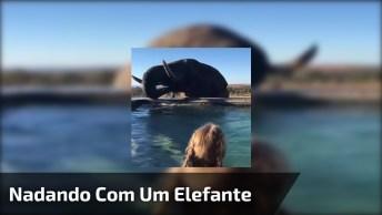 Nadando Com Um Elefante Na África, Vale A Pena Conferir Essa Linda Imagem!