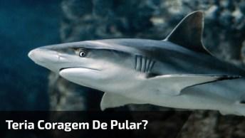 Nadando Com Um Tubarão, Será Que Você Teria Coragem De Pular Em Um Lugar Desse?