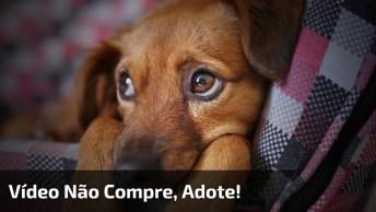 Não Compre Animal De Estimação, Adote, Tem Muitos Animais Querendo Ser Amados!