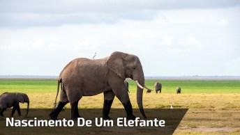 Nascimento De Um Filhote De Elefante, A Natureza É Perfeita!