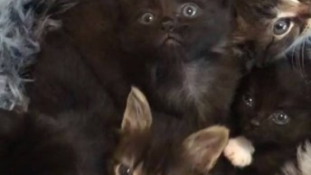 Ninho De Fofuras, Olha Só Estes Gatinhos Ronronando Olhando Para Câmera!