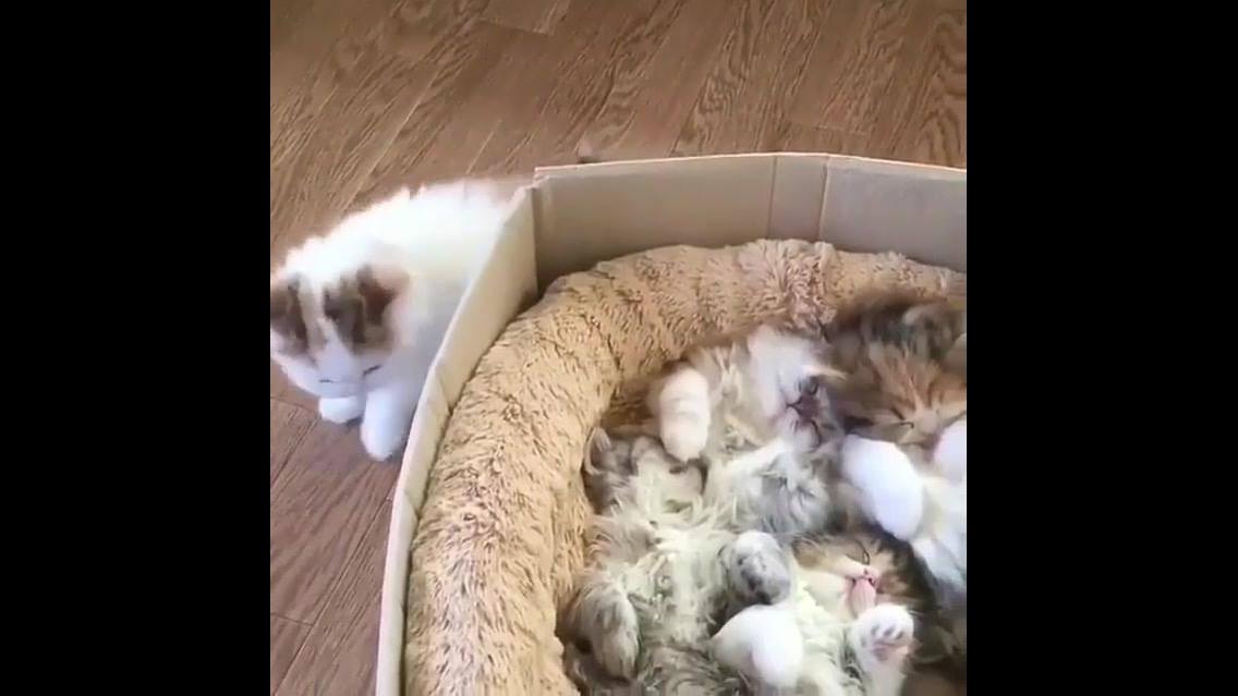 Ninho de gatinhos, olha só que coisinha mais lindas estas criaturinhas!!!