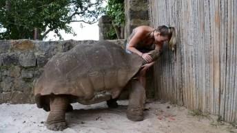 Nossa Nunca Havia Visto Uma Tartaruga Com Esse Tamanho, Impressionada!