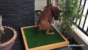 Novo Banheiro Para Cachorro, Essa Ideia É Muito Boa, Uma Das Melhores Até Agora!