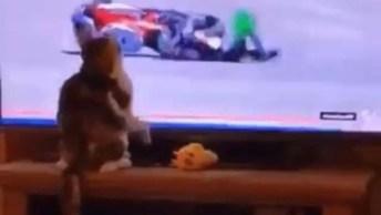 Nunca Deixe Seu Gato Ver Uma Corrida De Moto, Ele Pode Fazer Coisas Inusitadas!