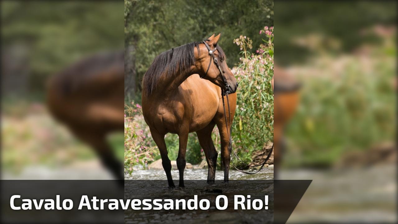 Cavalo atravessando o rio!