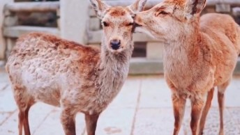 O Amor Entre Os Animais É O Mais Puro E Sincero, Confira!