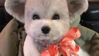 O Cachorrinho Mais Fofo Da Internet Esta Neste Vídeo, Confira!