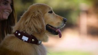 O Cachorro Dug Do Desenho 'Up! ' Agora Na Vida Real, Super Fofo!