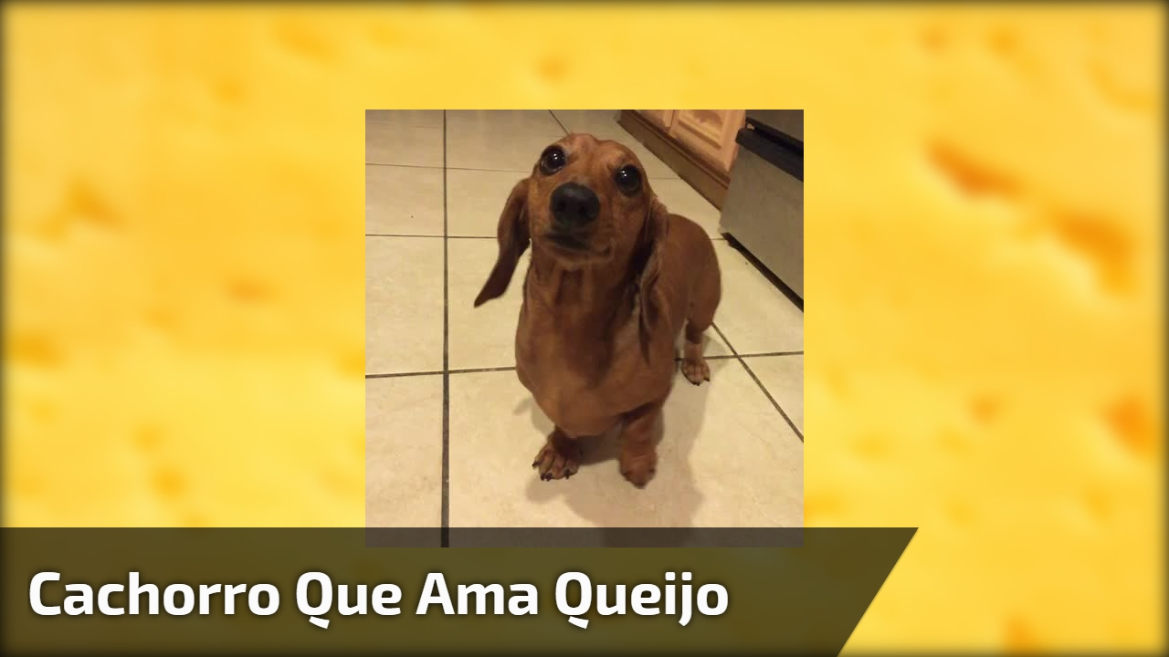 Cachorro que ama queijo
