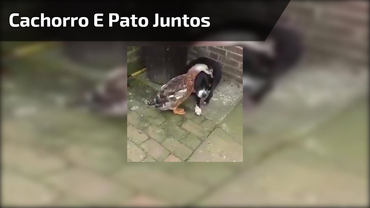 Cachorro e Pato juntos