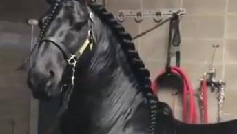 O Cavalo Mais Bonito Que Você Vai Ver Hoje, Ele Tem Um Brilho Incrível!