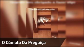 O Cúmulo Da Preguiça De Um Gato Descendo As Escadas, Confira Hahaha!