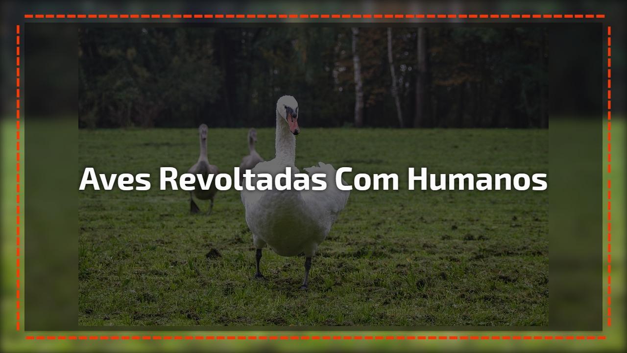 Aves revoltadas com humanos