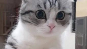 O Gato Mais Lindo Para Compartilhar No Facebook, Que Fofinho!