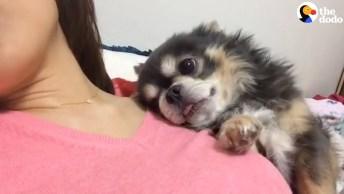 O Melhor Abraço Do Mundo É Dado Por Esse Cachorrinho Fofo, Confira!