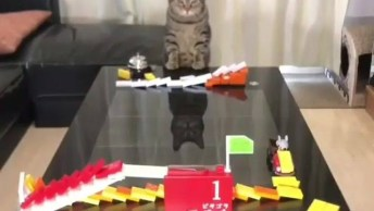 O Melhor Brinquedo Para Gatos, Eles Vão Amar Essa Ideia!