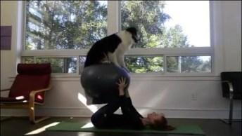 O Melhor Companheiro Para Treinar É O Seu Cão, Confira!